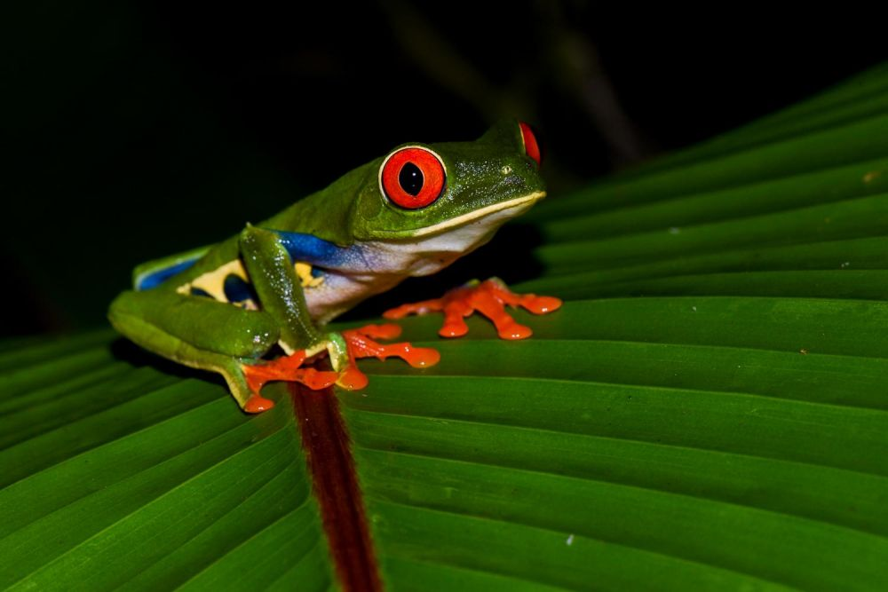 photo faune costa rica