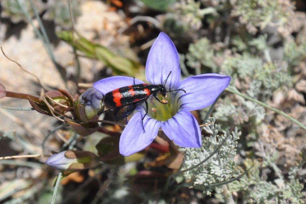 Observer Faune et flore ladakh