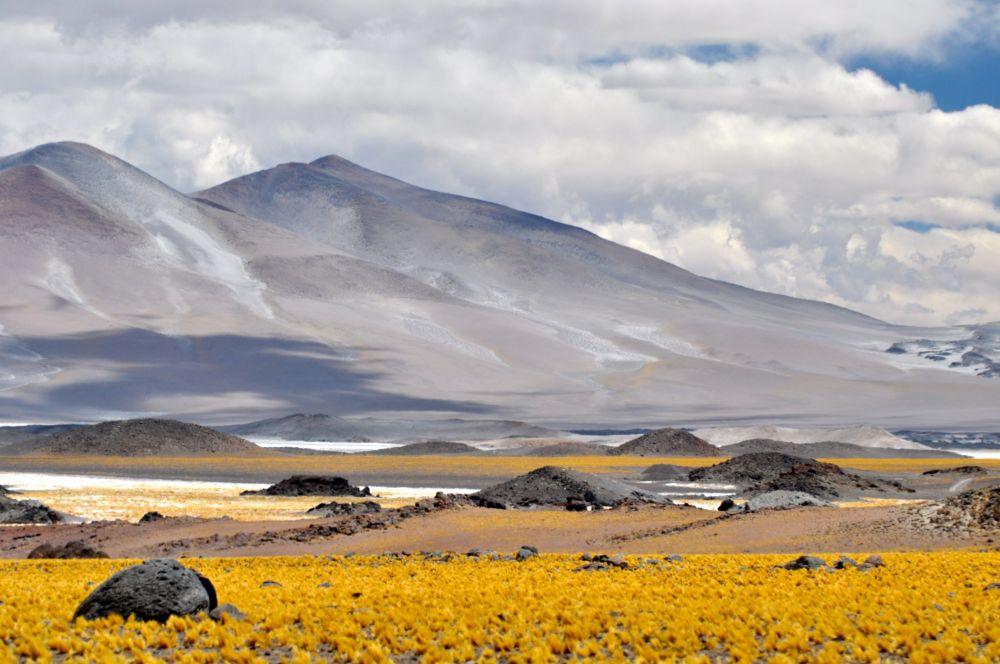 Pampa près du salar d'!antofalla, Argentine