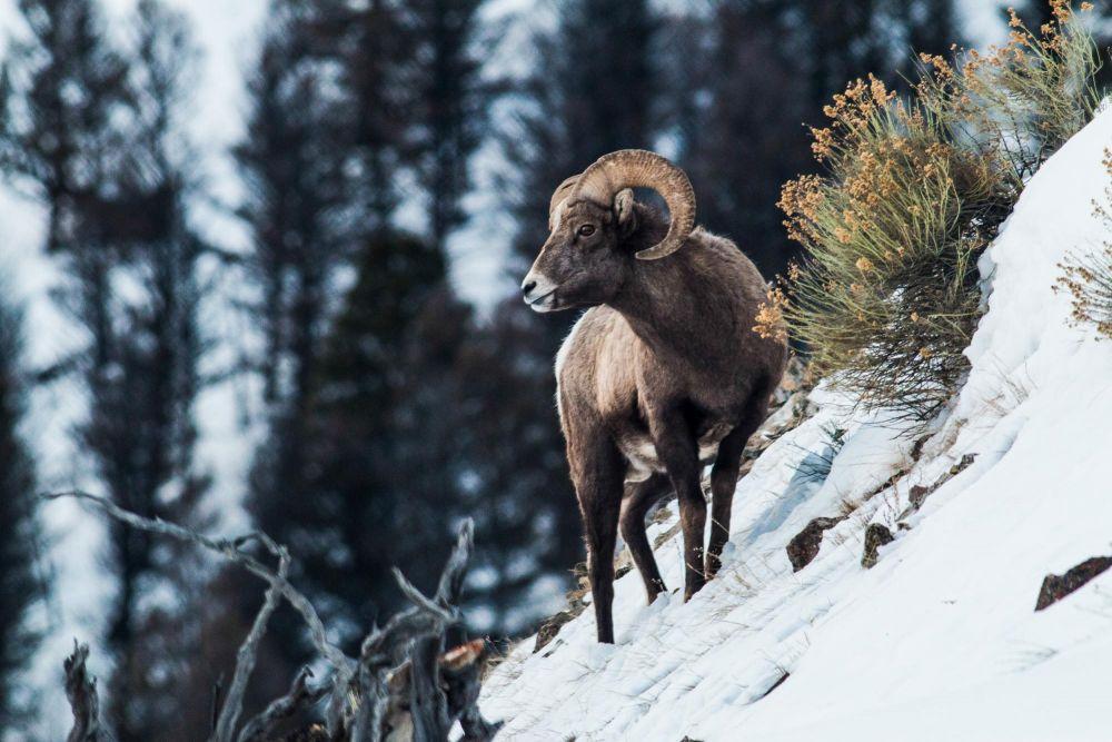 Photo voyage Yellowstone 21