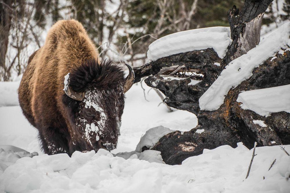 Photo voyage Yellowstone 15
