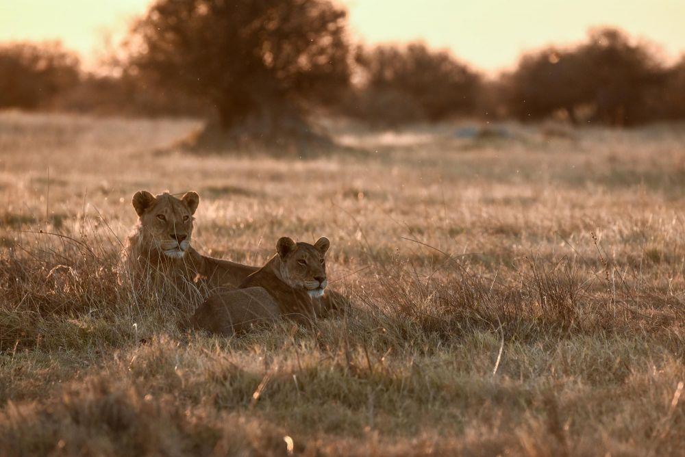 Photo voyage Botswana 10