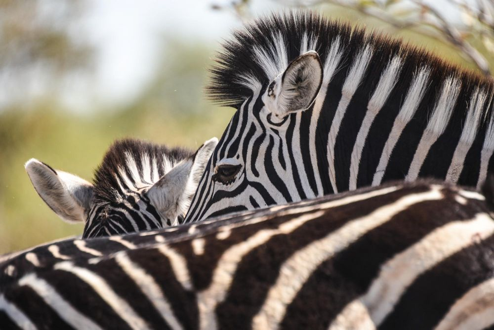 Photo voyage Botswana 18