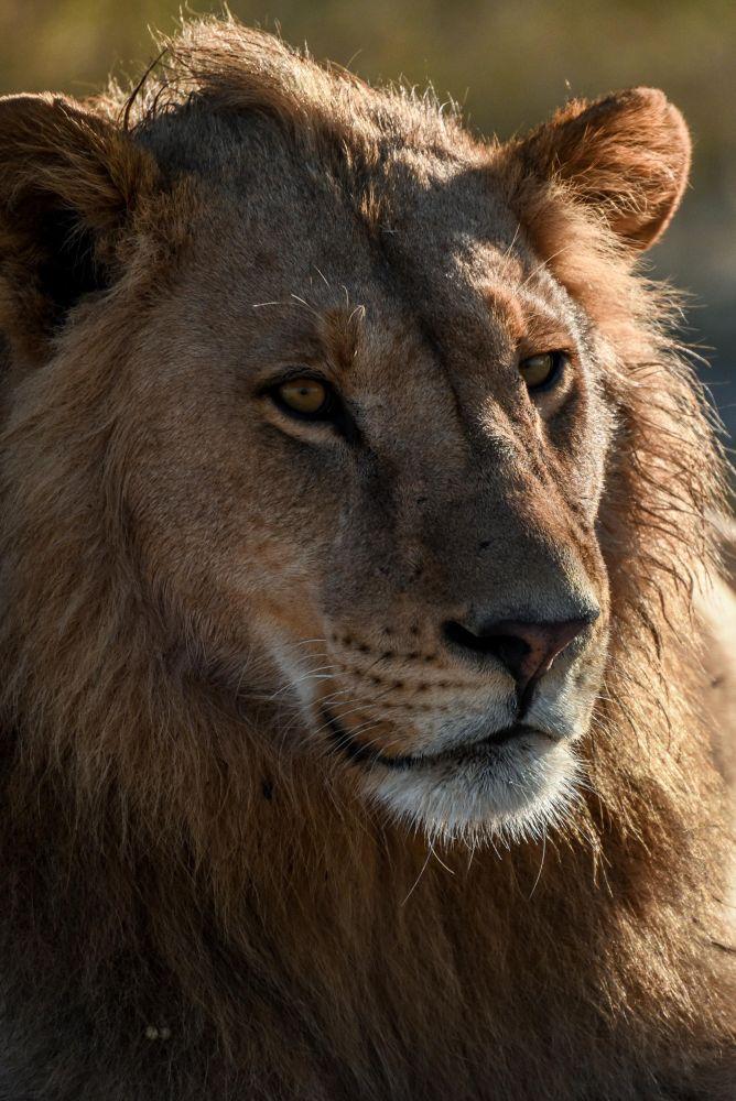Photo voyage Botswana 12