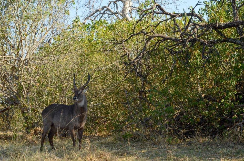 Photo voyage Botswana 15