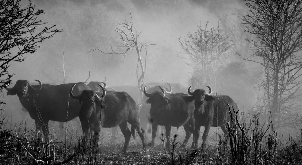 Photo voyage Botswana 26