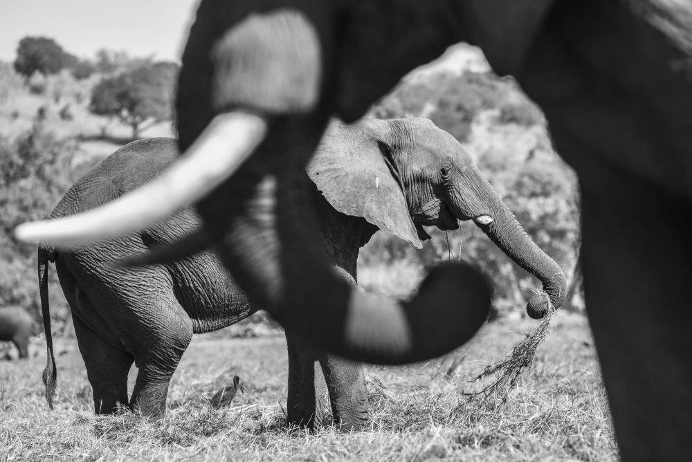 Photo voyage Botswana 29