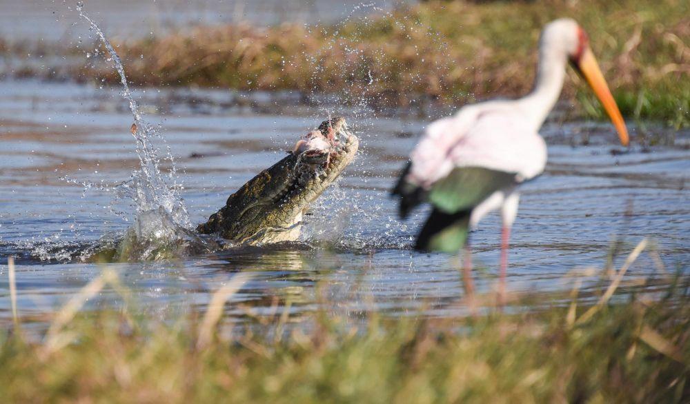 Photo voyage Botswana 17