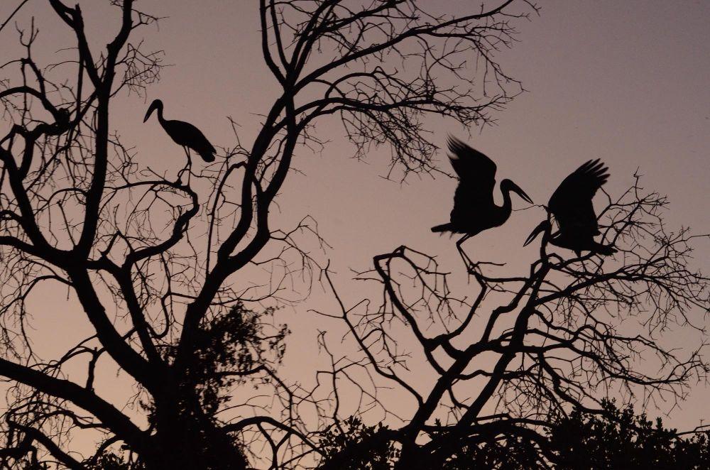 Photo voyage Botswana 13