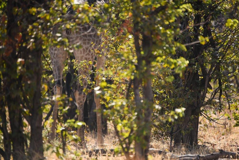 Photo voyage Botswana 20