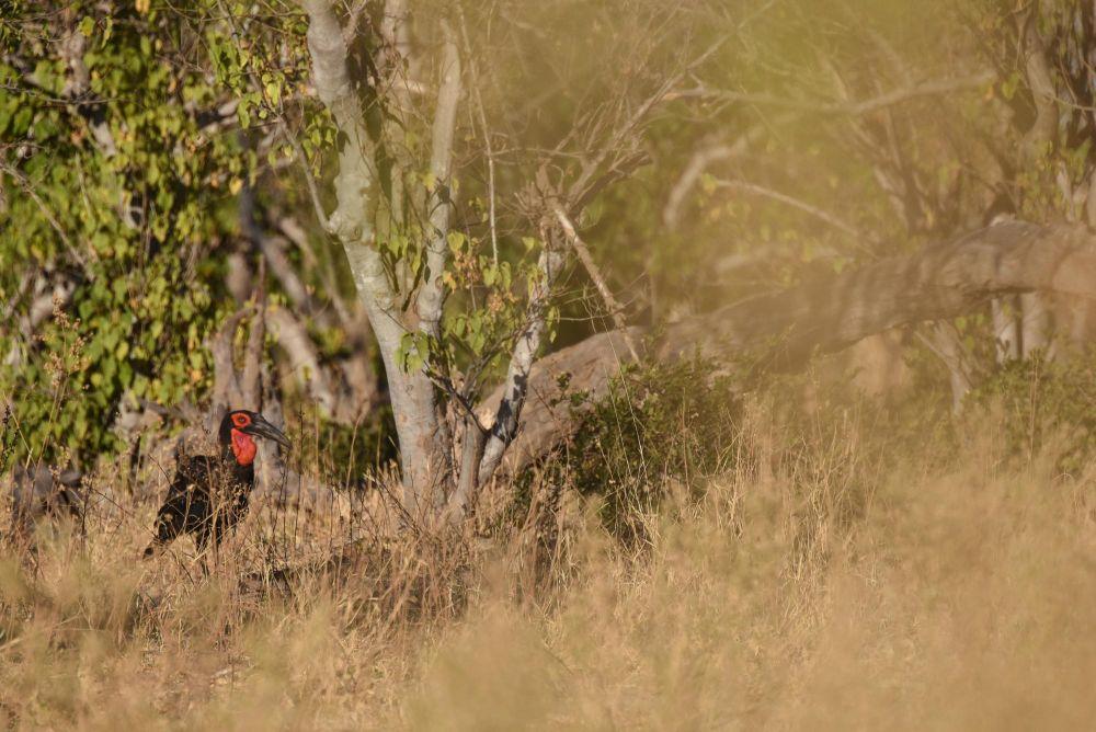 Photo voyage Botswana 24
