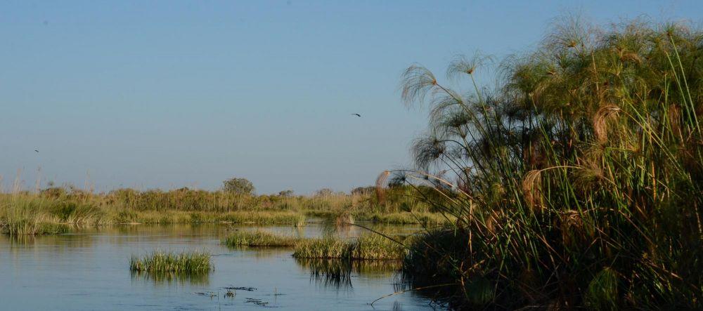 Photo voyage Botswana 23