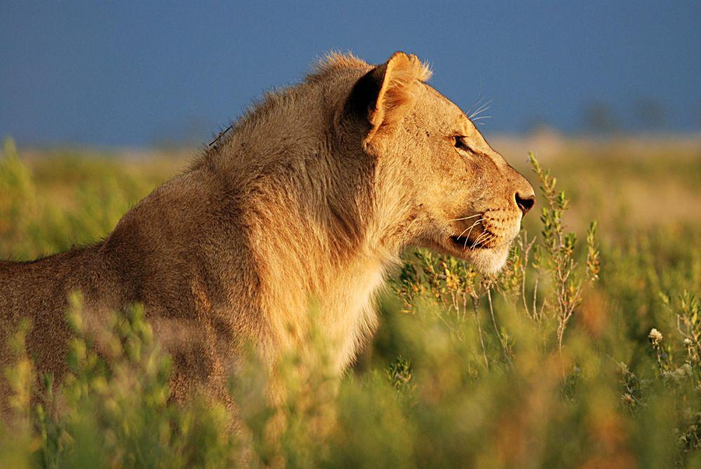 Photo voyage Namibie 5