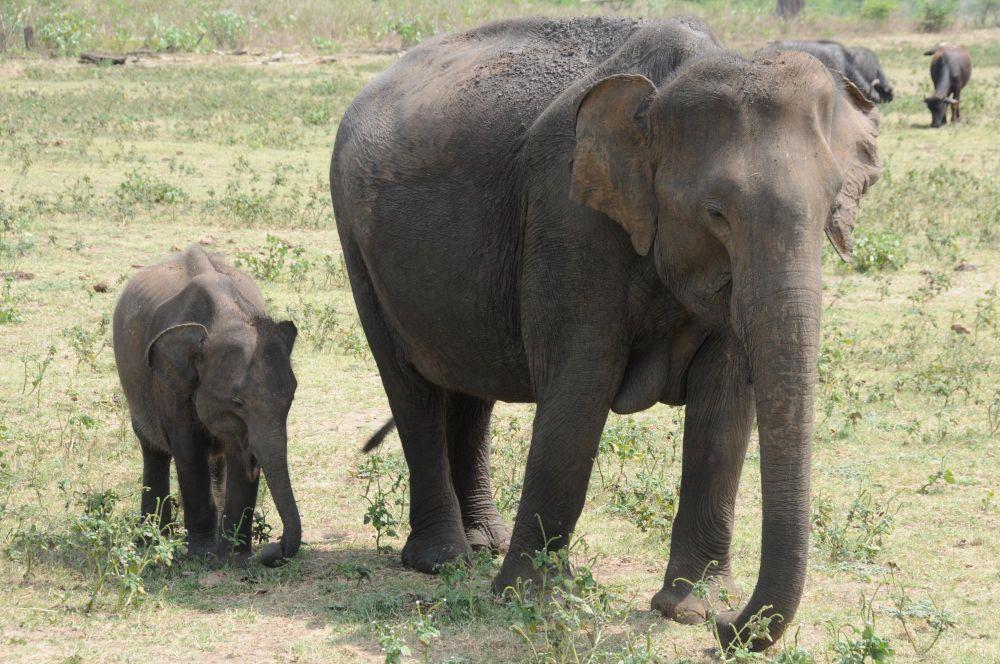 Photo voyage Sri lanka 2