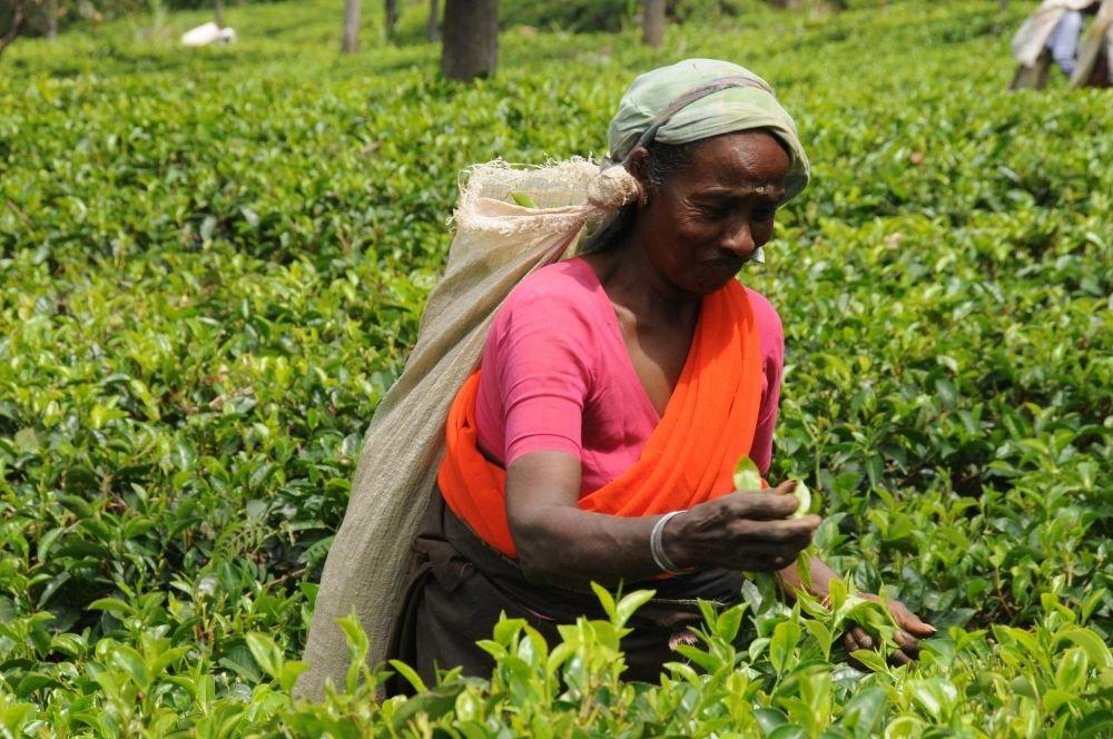 Photo voyage Sri lanka 10