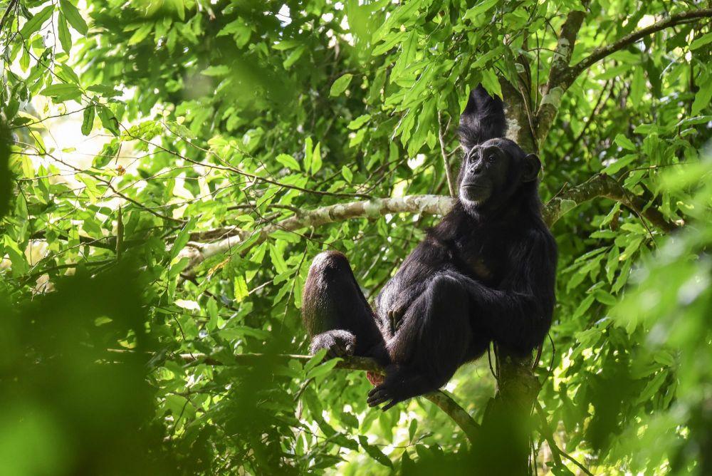 Photo voyage Ouganda 6