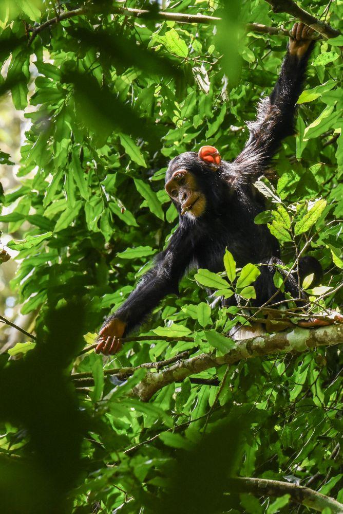 Photo voyage Ouganda 8