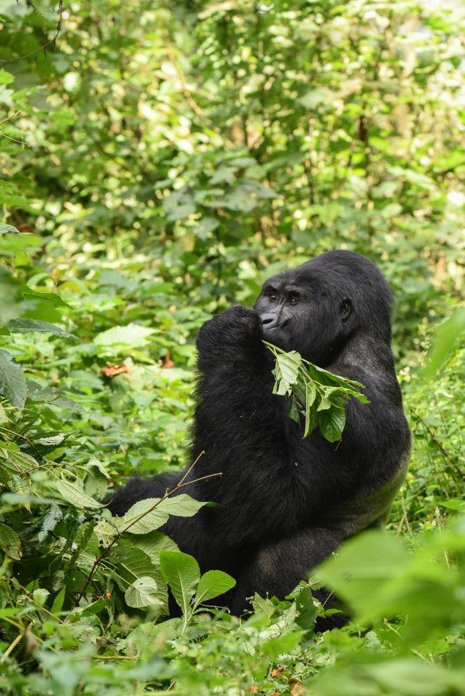 Photo voyage Ouganda 15
