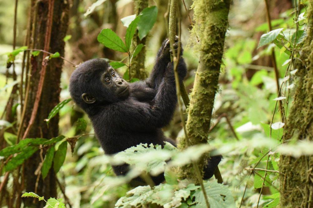 Photo voyage Ouganda 16