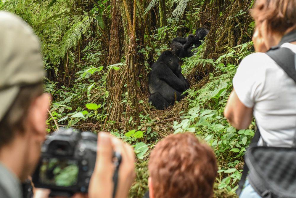 Photo voyage Ouganda 19