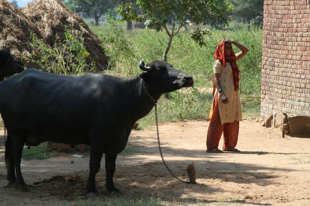 Scène de vie rurale sur les rives du Gange