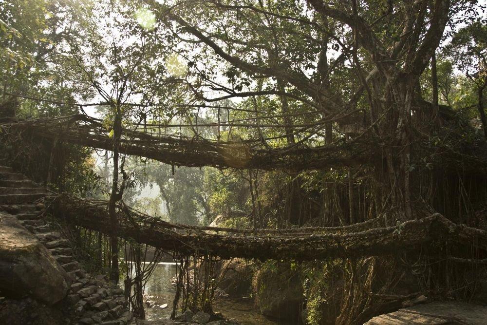 Pont vivant en racine de ficus, Meghalaya