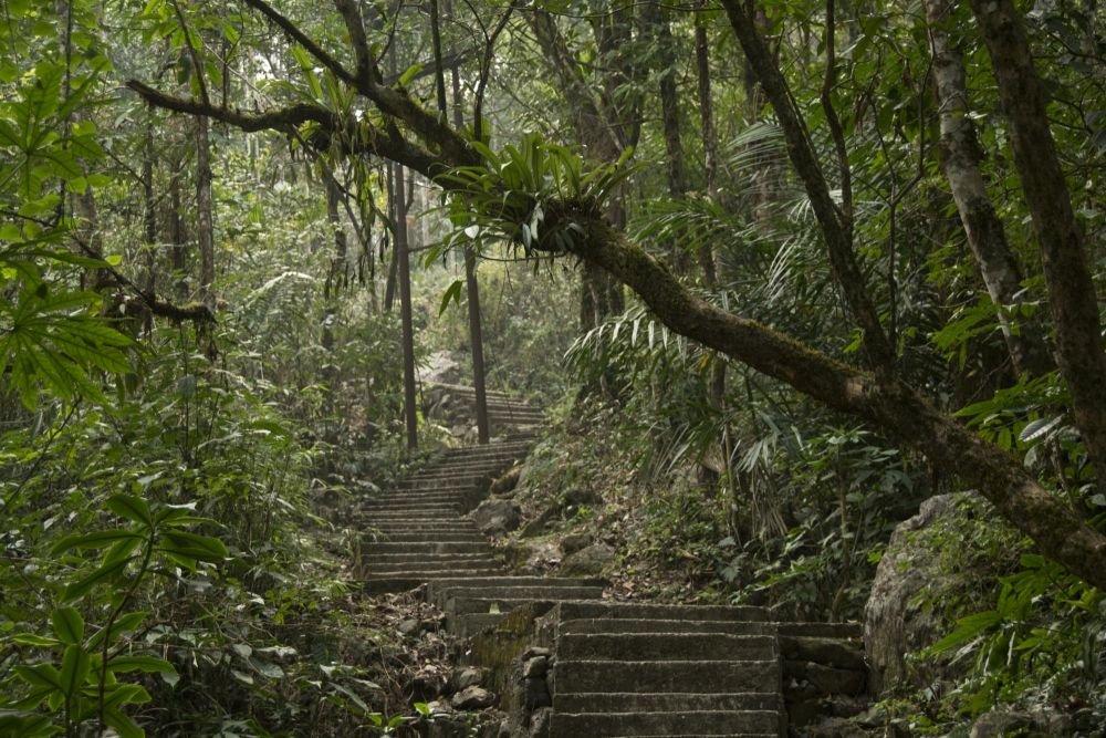 forêt luxuriante du Meghalaya