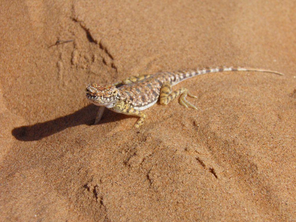 Photo voyage Oman 7