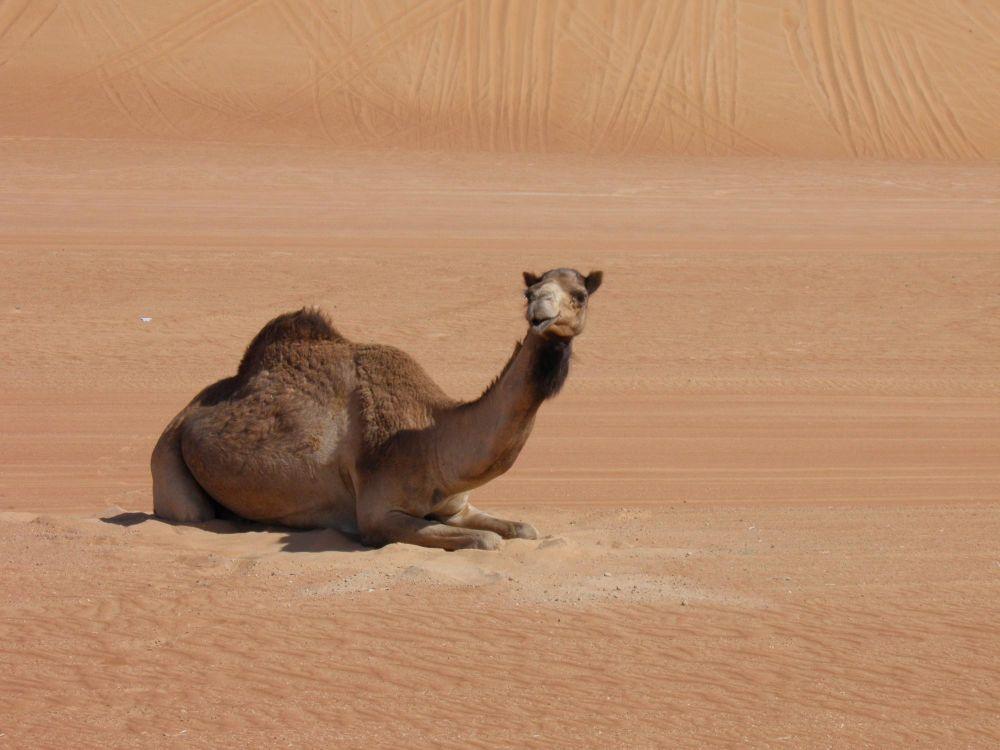 Photo voyage Oman 13