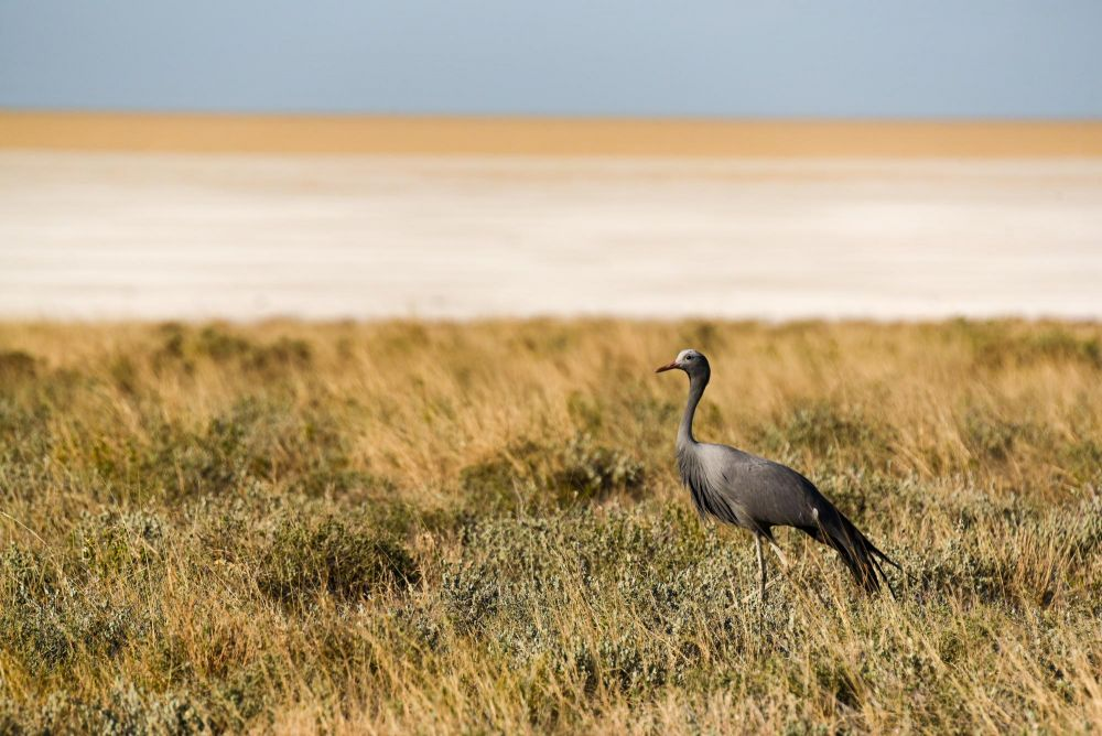 Photo voyage Namibie 9