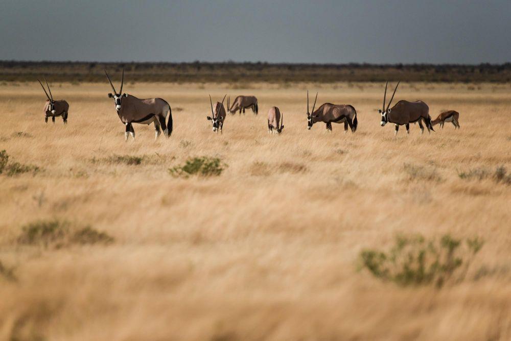 Photo voyage Namibie 23