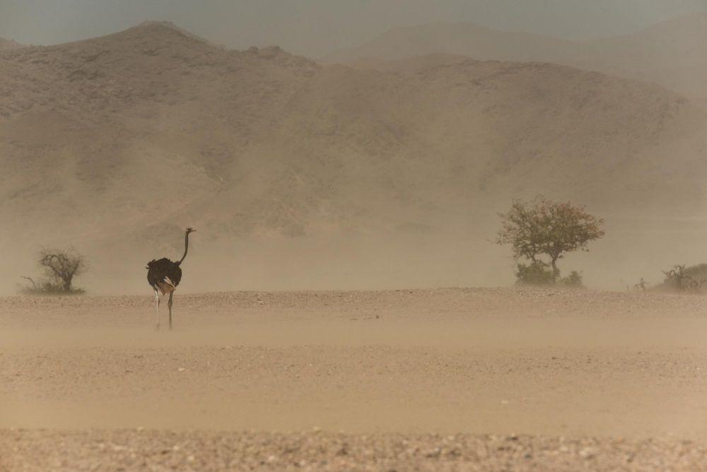 Photo voyage Namibie 29