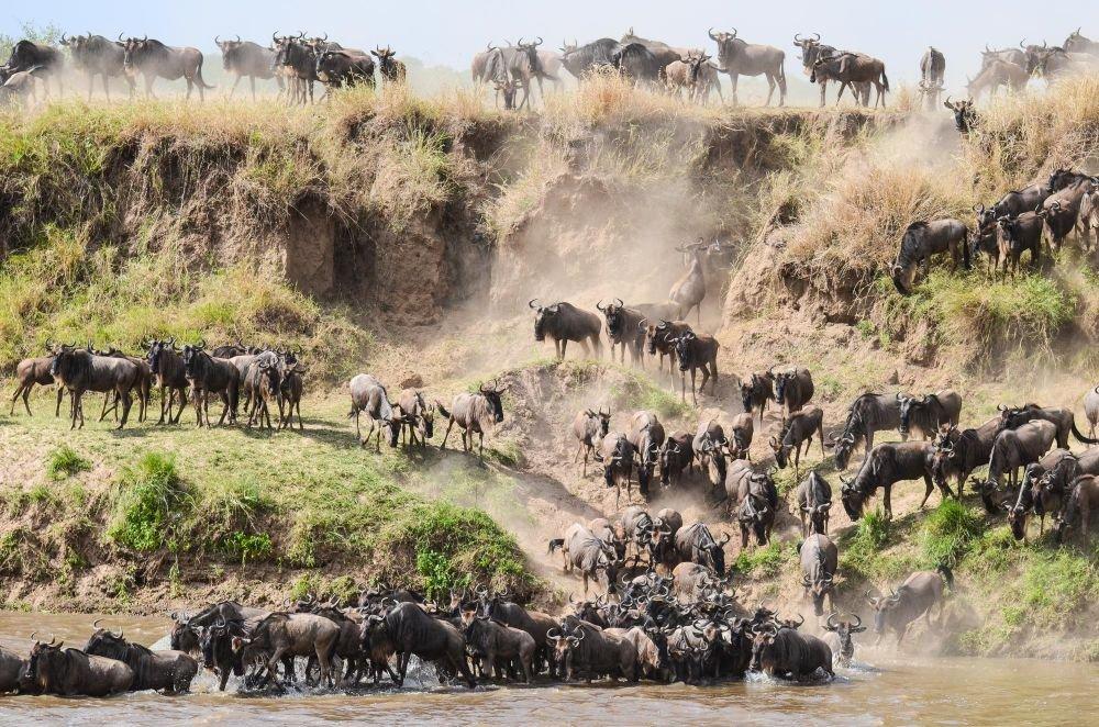 Photo voyage Tanzanie 7