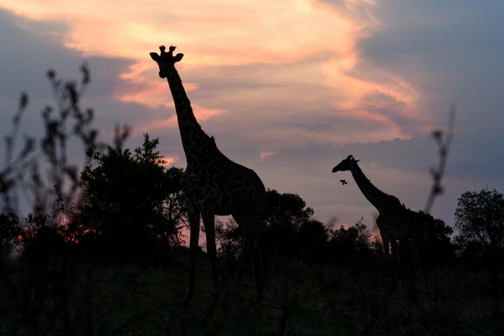 Photo voyage Tanzanie 11