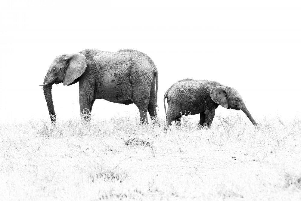 Photo voyage Tanzanie 16