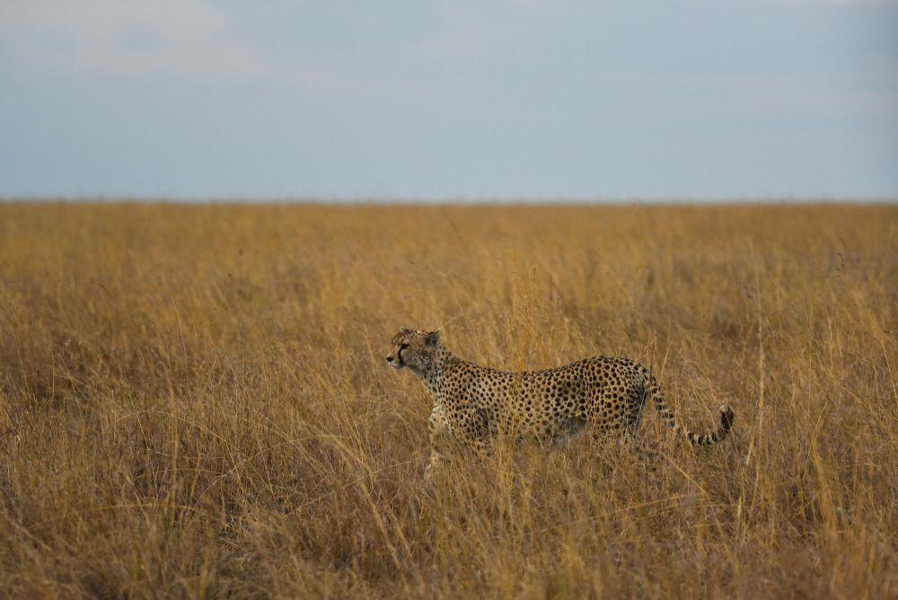 Photo voyage Tanzanie 20