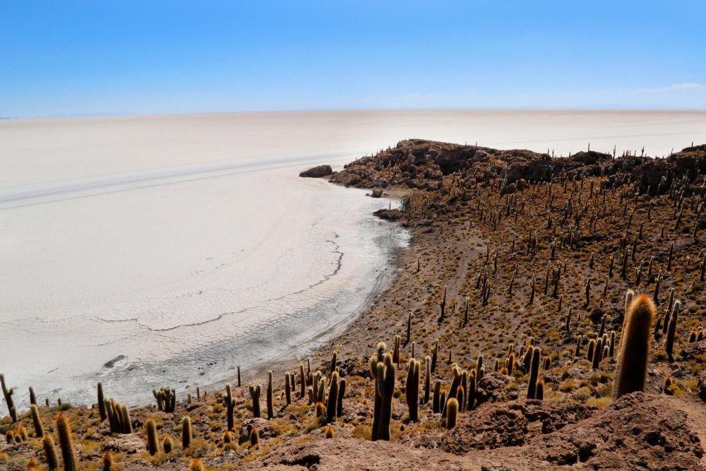 Île d'Incahuasi couverte de cactus, Salar d'Uyuni, Bolivie