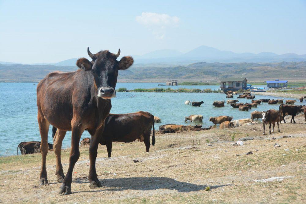 Photo voyage Arménie 11