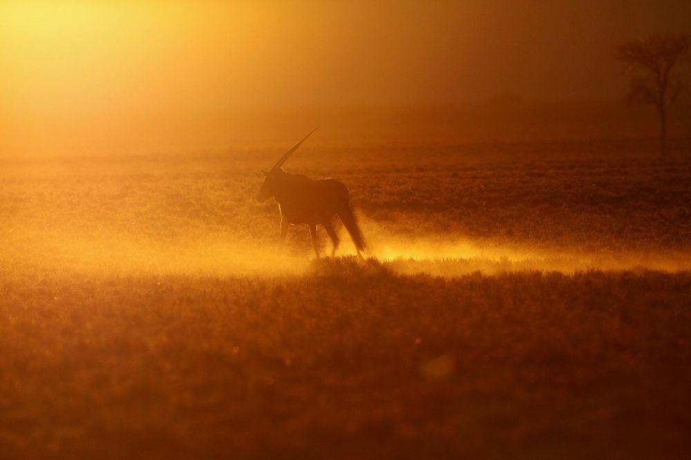 Photo voyage Namibie 10