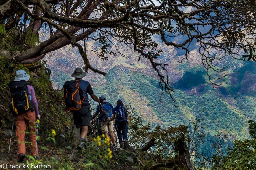 Premiers jours du trek, dans les forêts de rhododendrons