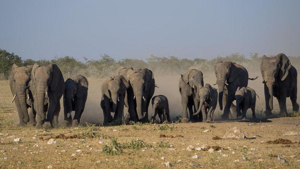 troupeau éléphants Namibie