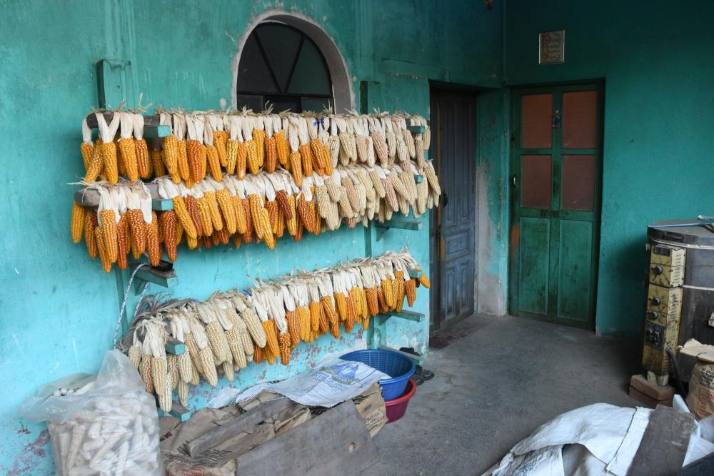 poupées de maïs sur un séchoir à Totonicapan