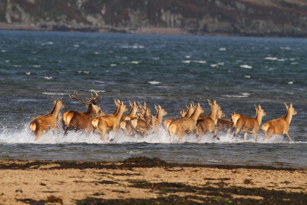Photo voyage Écosse 6