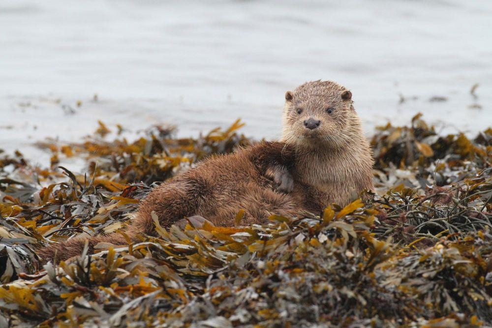 Photo voyage Écosse 10