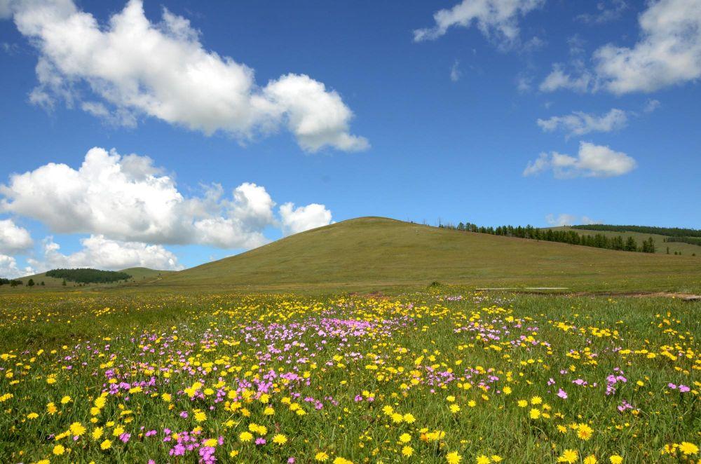 steppes mongoles en fleurs
