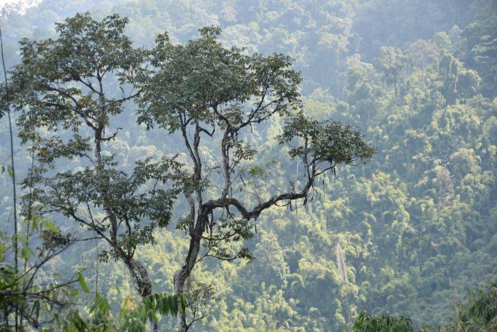 Relief et dense forêt d'Arunachal