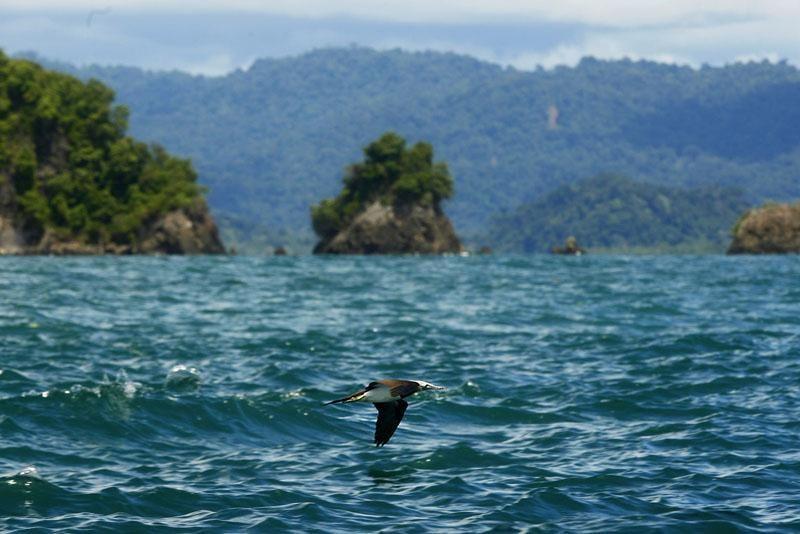 Oiseau de mer, Côte pacifique du Choco, Colombie