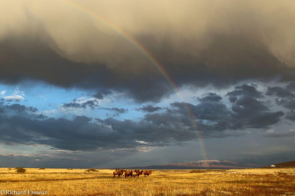 Lumières sur la steppe en  mongolie