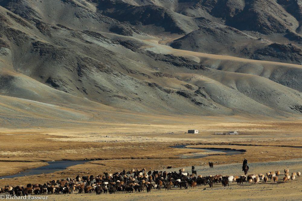 plaine de l'Altaï en Mongolie