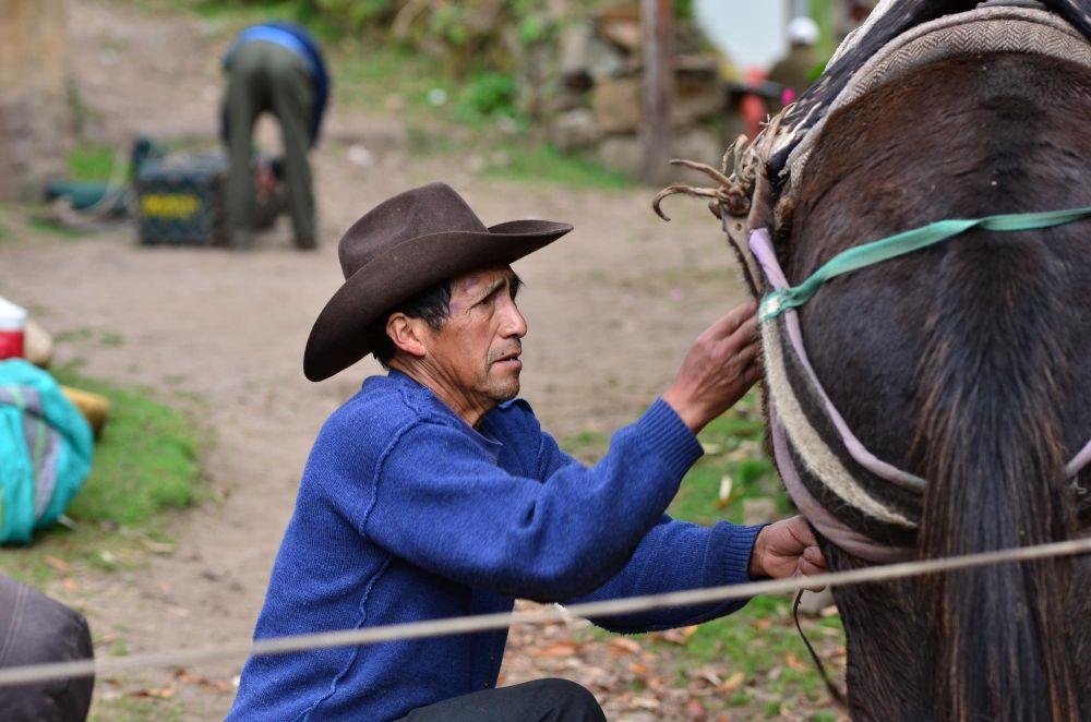 muletier qui harnache ses bêtes, Trek de Choquequirao, Pérou